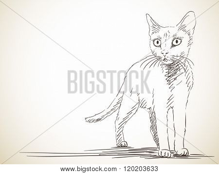 Sketch of cat, Hand drawn illustration