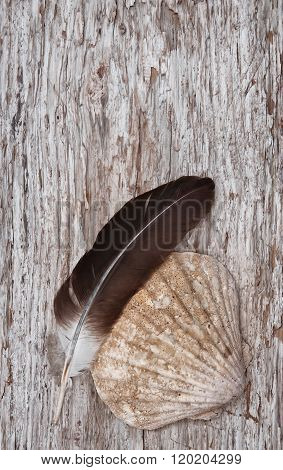 Seashell And Feather On The Old Wooden Background