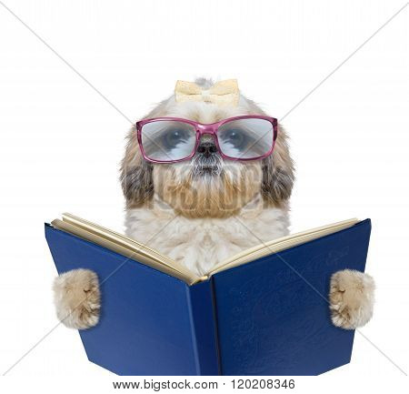 Dog With Big Funny Glasses Is Reading A Book