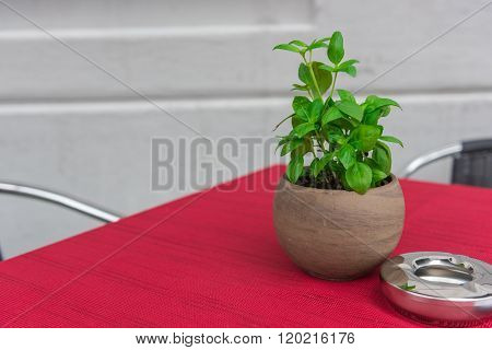 Cafe Table With Herbs In A Pot