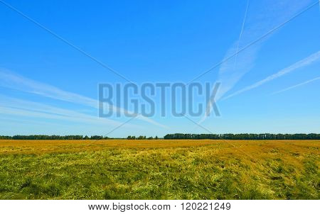 Landscape With Barley Field