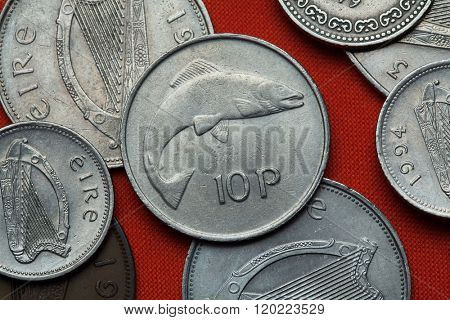 Coins of Ireland. Salmon depicted in the Irish 10 pence coin.