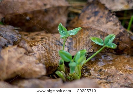 young plant sprout through the leaves