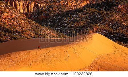 Hiker At Coral Pink Sand Dunes State Park In Utah