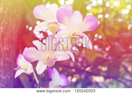 Orchid photo, customizable style abstract style vintage.