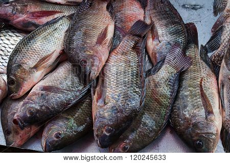 Fresh nile tilapia are on sale in the bazaar.