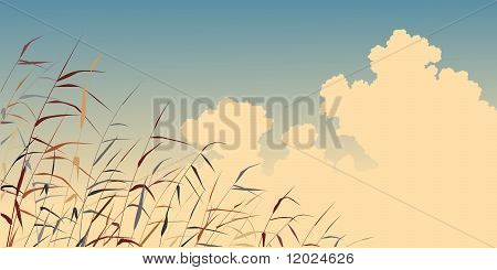 Reed Sky
