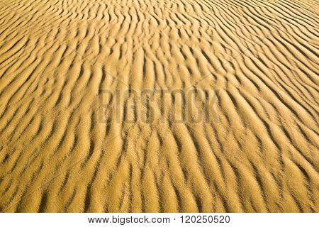 Natural Sand Ripple Texture