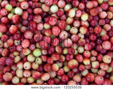 Scattering of cranberries close-up
