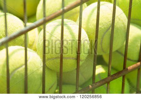 tennis ball in basket