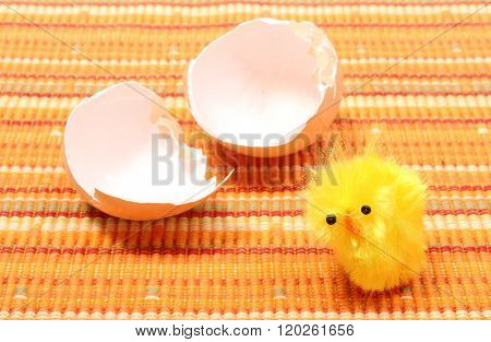 Easter Chicken With Broken Eggshell, Chicken Or The Egg