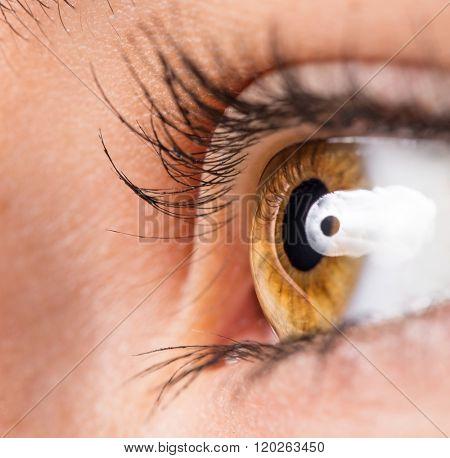 Woman eye with long eyelashes. Macro shot.