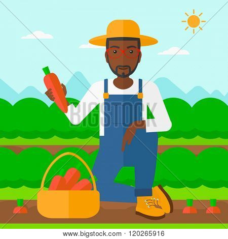 Farmer collecting carrots.