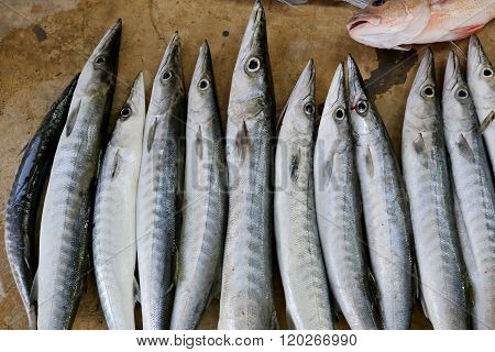 Marine Fish After The Fishing And Caught At Night.