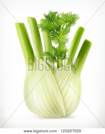Fennel, vector object