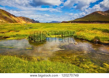 Green grass among hot springs. The picturesque valley in Landmannalaugar national park. Summer in Iceland