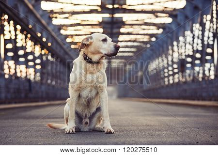 Waiting On The Old Bridge