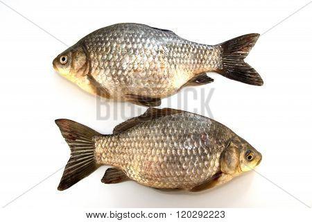 goldfish is isolated on white background fishing trophy