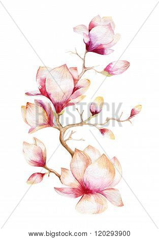 Painting Magnolia flower wallpaper. Hand drawn Watercolor floral
