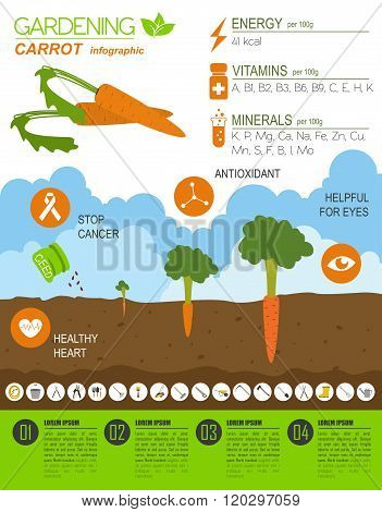 Gardening work, farming infographic. Carrot. Graphic template. Flat style design