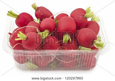 Small garden radishes