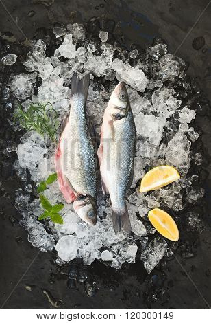 Raw seabass with lemon and rosemary on chipped ice over dark stone backdrop
