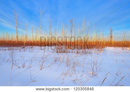 Orekhovo-zuevo District. Russia.