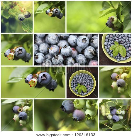 Collage of fresh blueberries