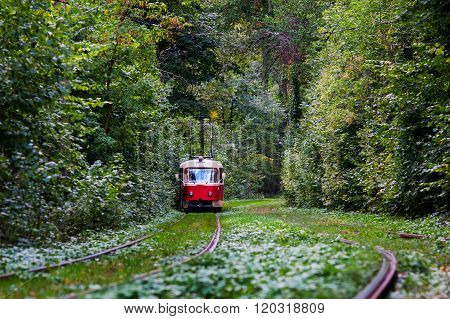red tram rides through the trees in park