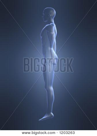 Male Shape