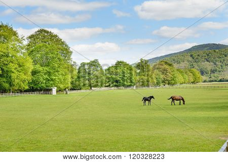 Horses In A Paddock In Scotland.