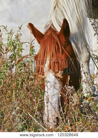 white horse with brown spots and a white mane eats grass