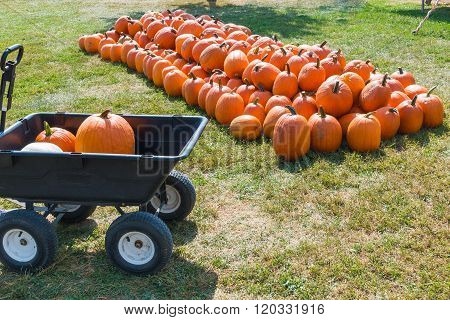 Cart With Colorful Pumpkins At Pumpkin Patch.