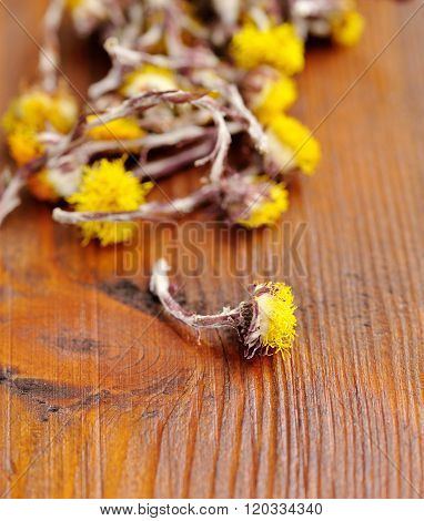 Dried Flowers Coltsfoot (tussilago Farfara) On A Wooden Background