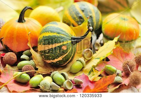 Mini Decorative Pumpkins With Acorns On Autumn Leaves