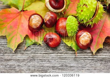 Fresh Chestnuts With Maple Leaves On Wooden Background