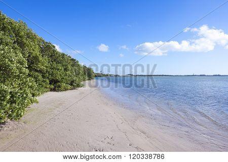 Black Mangroves At Low Tide