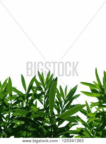 Green Plant leaves against a white background