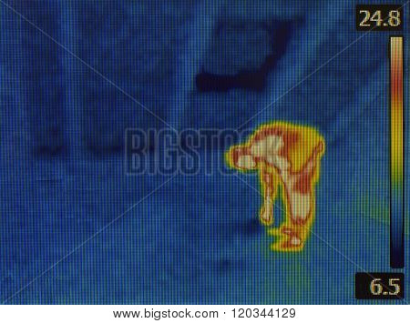 Thermal Image of Human at the Loft