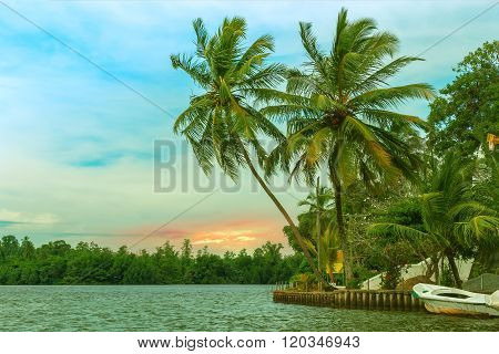 Tropical Palm Forest On The River Bank.