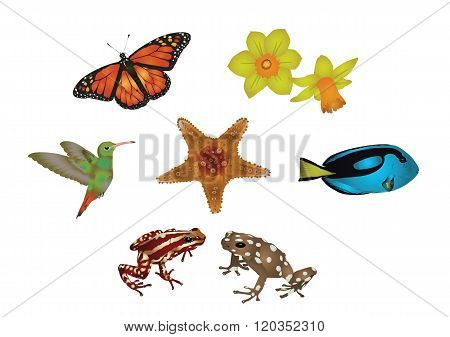 Amazing nature set - jewels of nature