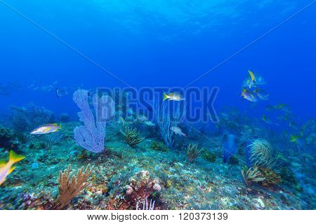Coral Reef Near Cayo Largo
