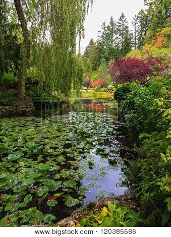 Complex flower gardens on Vancouver Island, Canada. Quiet pond, overgrown with water lilies