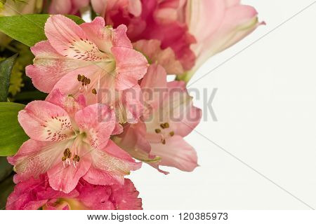 Flowers Petals On A White Background