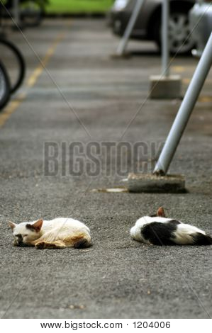 two kittens lying on the road lazily