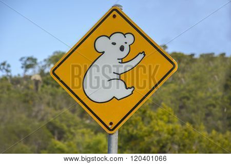 Koala warning sign in Queensland, Australia
