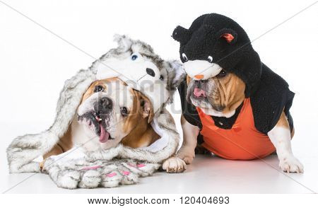 two english bulldogs dressed like a dog and cat on white background