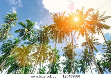 Palm Trees With Sun At The Zenith And Blue Sky Taken In El Nido  Palawan A Philippine Attraction -