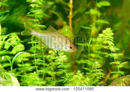 Fish in a beautiful fresh water environment with green plants