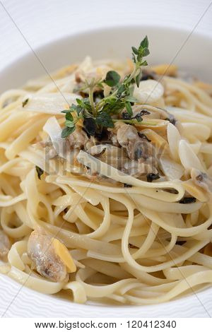 Close up of Sauteed pasta with clam